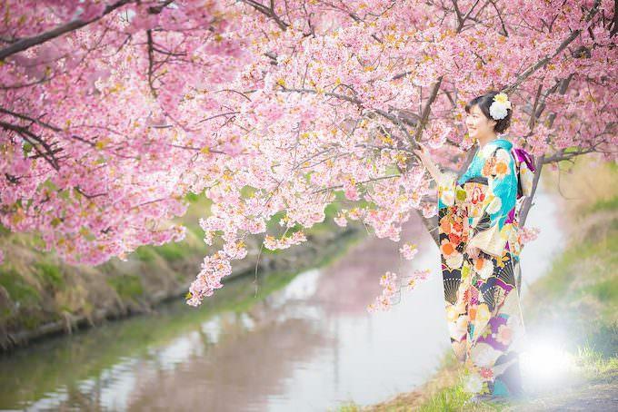 桜ロケーション17