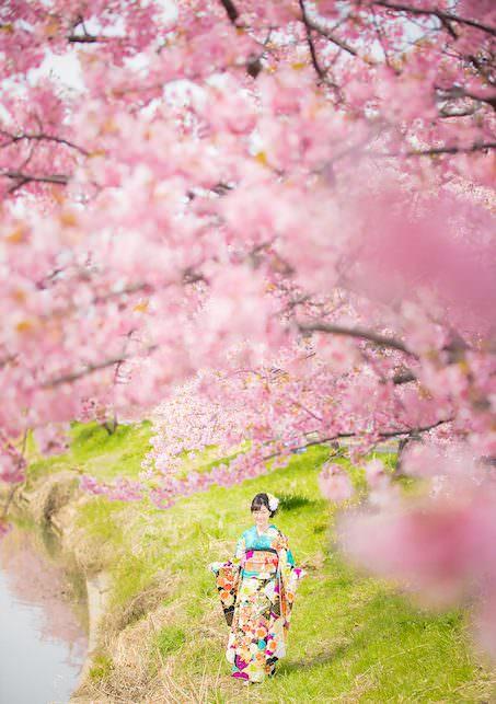 桜ロケーション18