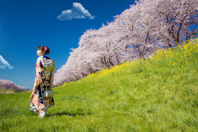 桜ロケーション31