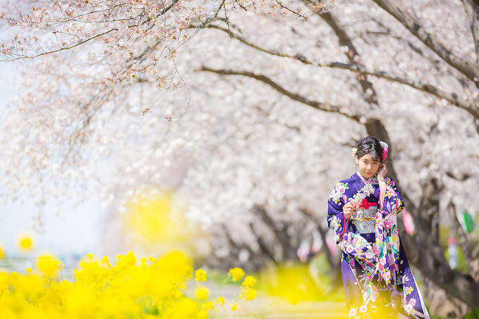 桜ロケーション37